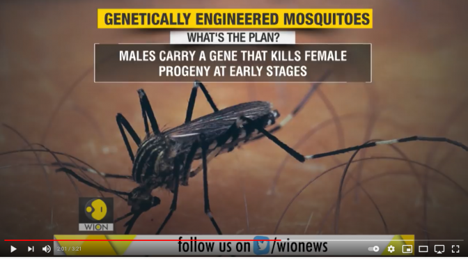 GMO Mosquitos Unleashed in South Florida